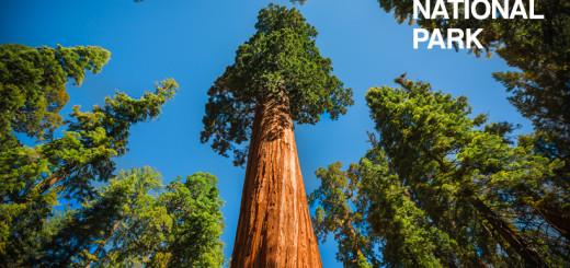 sequoia-national-park-1