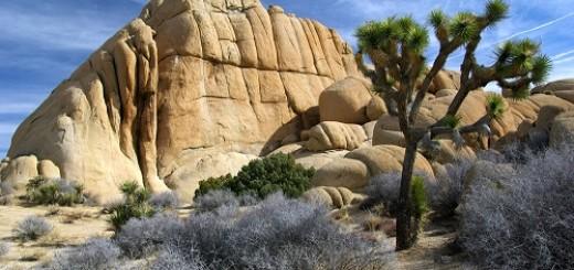 Joshua-Tree-Natl Park